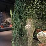 Dschungel-Raum